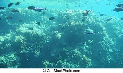 Underwater footage of sea life. Red