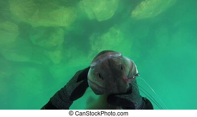 Underwater hunter, fisherman holding a fish under water. After a successful shot.