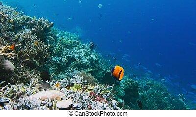 Underwater landscape of coral reef. Amazing underwater...