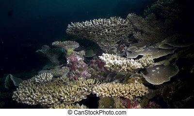 Underwater landscape sea of coral reef at night.