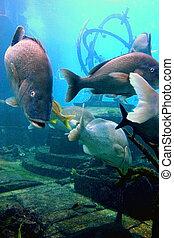 underwater life 2 - sea life