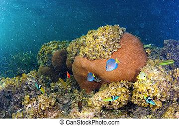 Underwater life in Dominican Republic