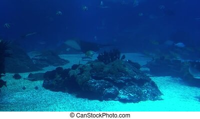 Underwater life of a coral reef. Sharks, rays and other fish. Large aquarium.