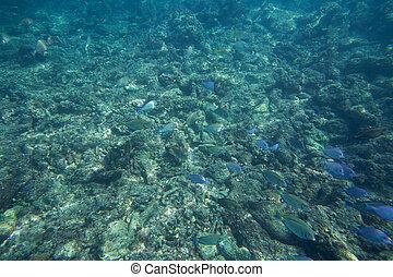 Underwater life of the Caribbean Sea
