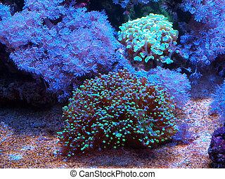 Underwater life - Underwater life- different anemons,...