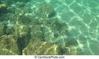 Underwater life with a school of fish in Spanish coastal