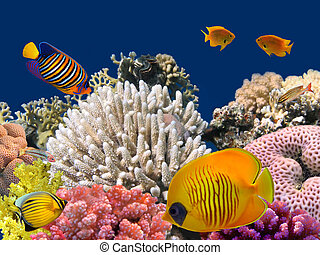 underwater liv, av, a, hard-coral, rev, röd sjögång, egypten