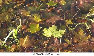 Underwater maple leaf