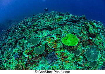 Apo Reef, Palawan, Philippines