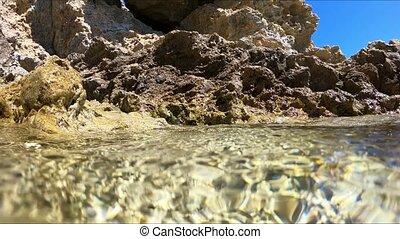 Underwater marine life, Italian ocean.