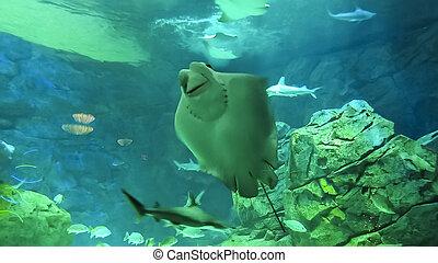 Underwater Marine Life View