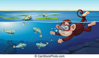 underwater pływacki, scena, małpa