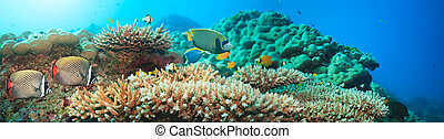 Underwater panorama with coral and fishes. Andaman sea....