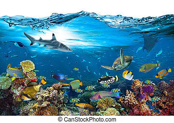 underwater paradise coral reef wave isolated background