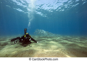 underwater photographer and ocean