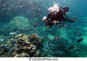 Underwater photographer photographing underwater