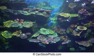 Underwater rock with multicolored tropical corals and exotic fishes.