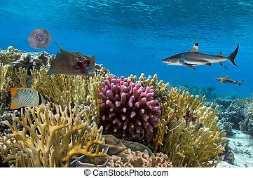 Underwater scene. Coral reef