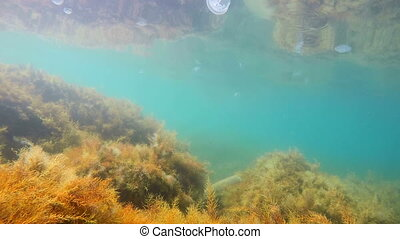 Underwater scene of Black Sea seabed in shallow water