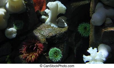 Underwater scene of Colorful Sea Anemones