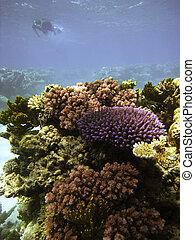 Underwater Scene of Great Barrier Reef in Queensland, Australia