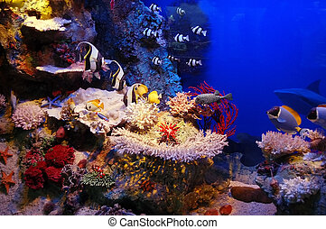 Underwater background - fishes and coral