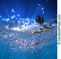 Underwater Scene with Palms