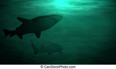 Underwater scene with sharks, hd