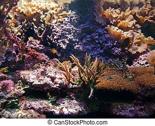 underwater scenery including various sea life species