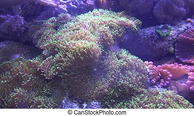 Underwater Sea Anemone Wildlife