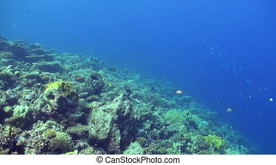 Underwater sea landscape of tropical coral reef.