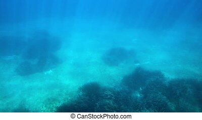 Underwater shallow water with rippling sun beams on the...