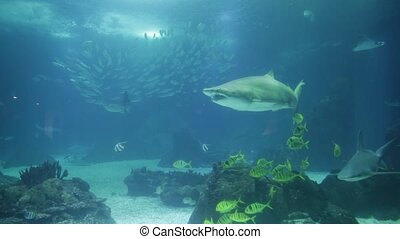 Underwater shark background - Underwater blue background....