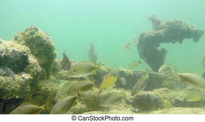 Florida Keys tropical fish - Underwater shoot Florida Keys...