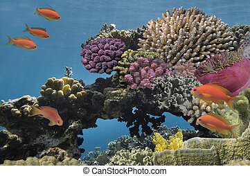 Underwater shoot of vivid coral reef with a fishes