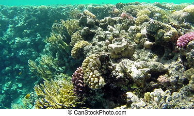 Underwater shooting exotic inhabitants of Red Sea, Egypt