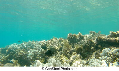 Underwater shot of a coral reef.