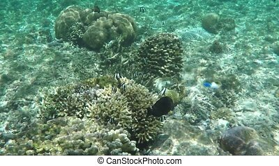 Underwater shot of coral reef and plants - View of...