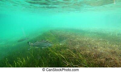 Underwater shot of fish swimming - Underwater tracking shot...