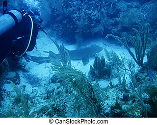 Underwater shot of Shark off the Galapagos Islands