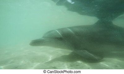 Underwater shot of two dolphins - An underwater shot of two...