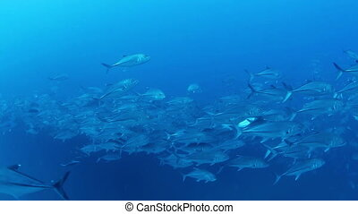 underwater shots whilst scuba diving in cabo pulmo marine...