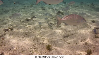 underwater shots whilst snorkeling in a marine park, mexico...