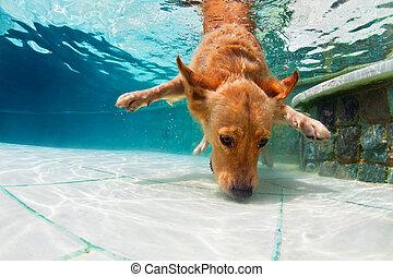 underwater skakanie do wody, kałuża, pływacki, pies