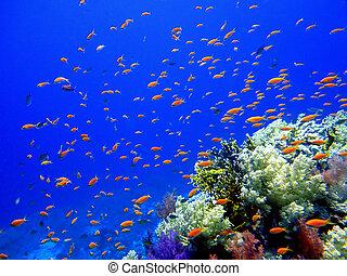 underwater, skole, fish