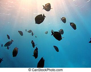 underwater, skole, fish, sollys