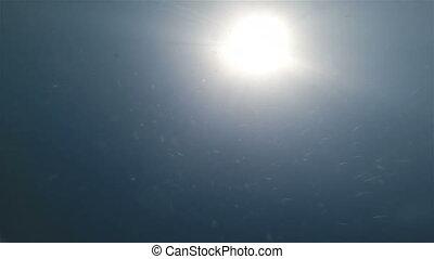 Underwater sunrays