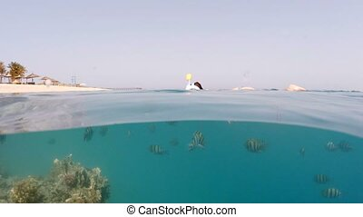 Underwater surface split view of coral fish and resort beach...