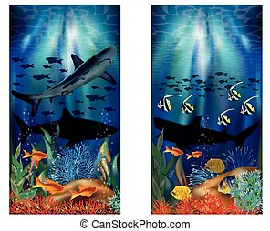 Underwater tropical banners with Shark, vector illustration
