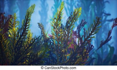 Underwater tropical colourful soft-hard corals seascape